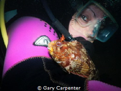 A very friendly Tompot blenny (Parablennius gattorugine) ... by Gary Carpenter